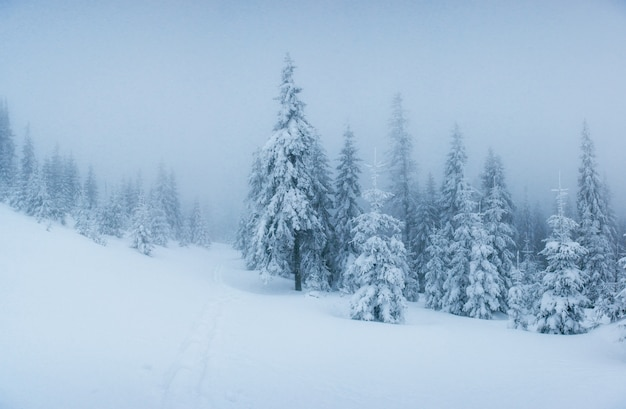 Alberi del paesaggio invernale nel gelo e nella nebbia.