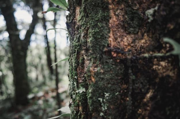 Alberi della natura che creano un'isola piena di alberi.