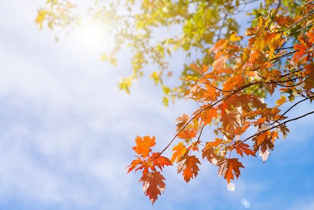 Alberi di autunno in una foresta e chiaro cielo blu con il sole