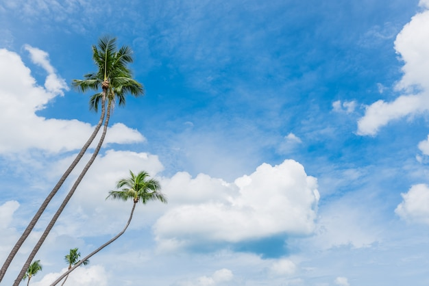 Alberi di cocco e bel cielo blu