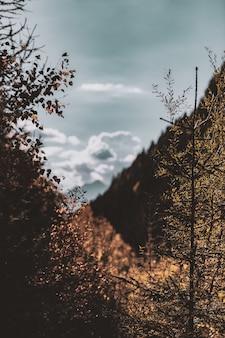 Alberi e montagne