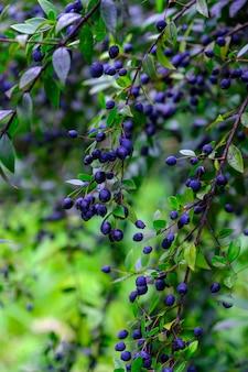 Alberi e piante nel giardino botanico. fitta vegetazione verde nel giardino botanico. tenerife. spagna.