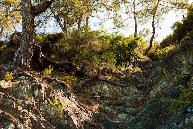 Alberi e radici sullo sfondo del terreno