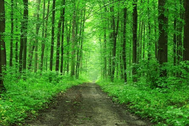 Alberi forestali e percorso