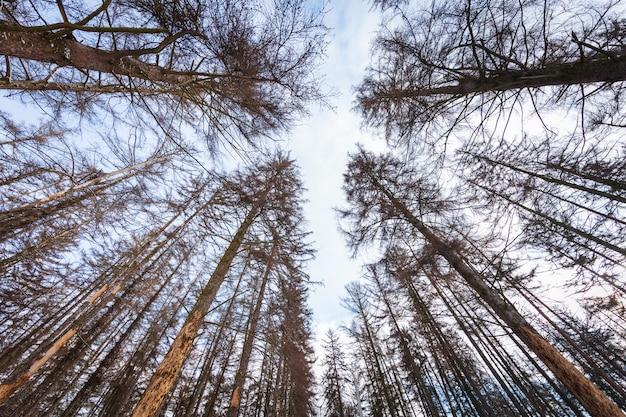 Alberi forestali invernali. sfondi di natura neve legno.