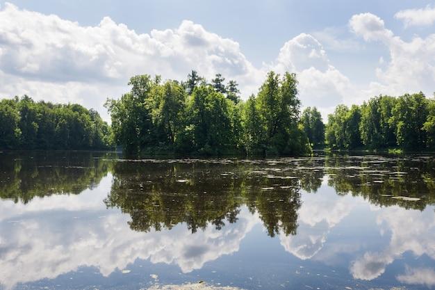 Alberi forestali sulla riva del fiume. riflessione nel fiume in una giornata di sole estivo.