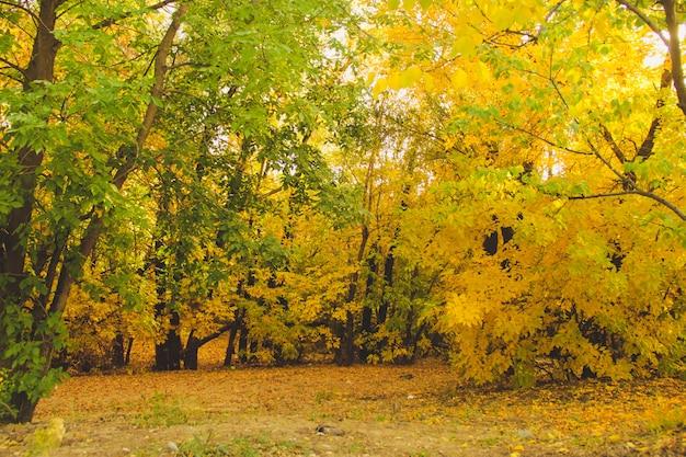 Alberi gialli e verdi nel parco tranquillo. concetto di autunno