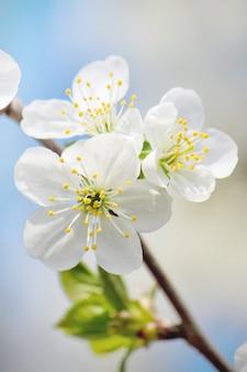 Alberi in fiore di primavera giardino fiorito natura del fuoco selettivo