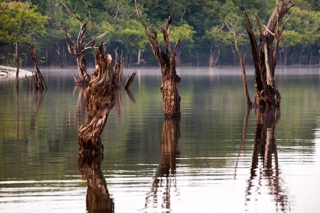 Alberi morti su igarape sul rio delle amazzoni