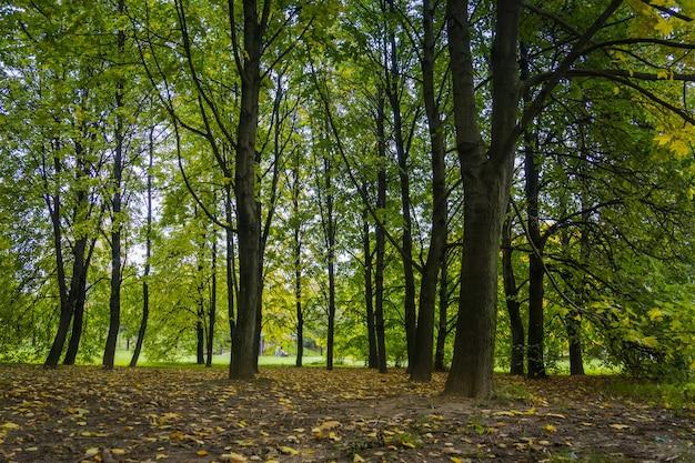 Alberi nel parco della città di autunno