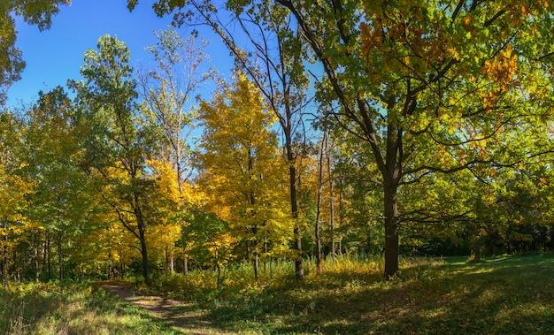 Alberi nel parco di sofiyivka in uman, ucraina