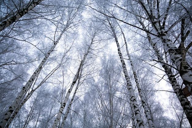 Alberi nel parco invernale