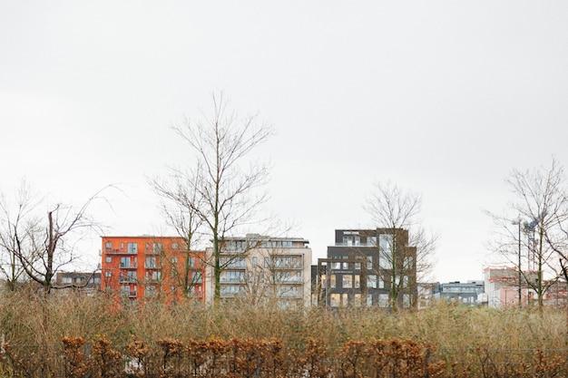 Alberi nudi in campo con paesaggio urbano