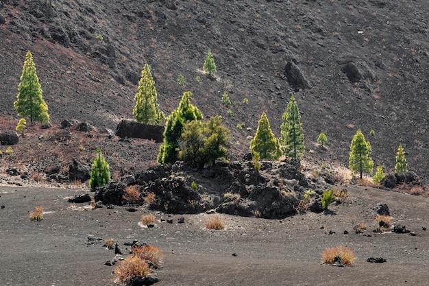 Alberi solitari che crescono su terreno vulcanico