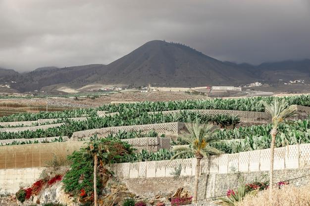 Alberi tropicali con uno sfondo di montagna