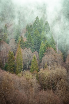 Alberi uno accanto all'altro nella foresta coperti dalla nebbia strisciante