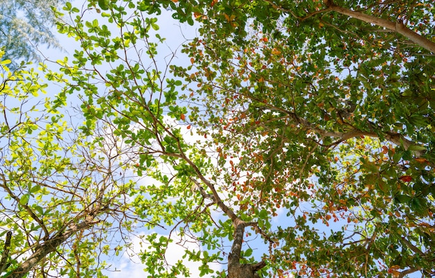 Alberi verdi del ramo della foglia su cielo blu