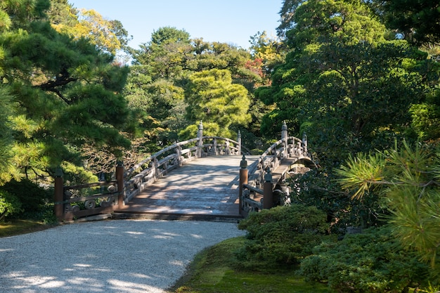Alberi verdi naturali in un giardino giapponese