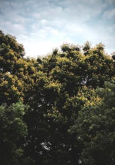 Alberi verdi rigogliosi in un parco