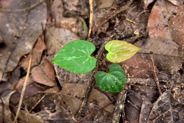 Albero a forma di cuore che cresce nel terreno su sfondo di foglie.