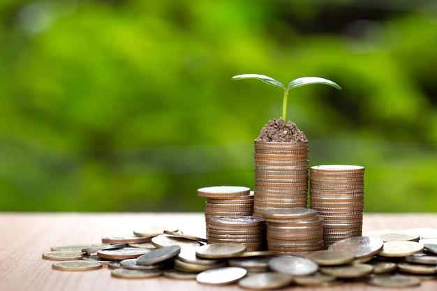Albero che cresce sul mucchio dei soldi delle monete.