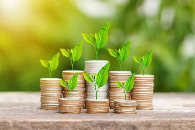 Albero che cresce sulla pila di monete con raggi di sole per il concetto di risparmio di denaro