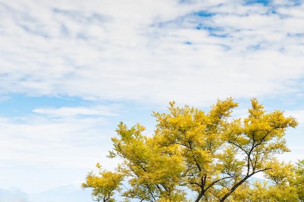 Albero con le foglie dorate sul fondo del cielo nuvoloso