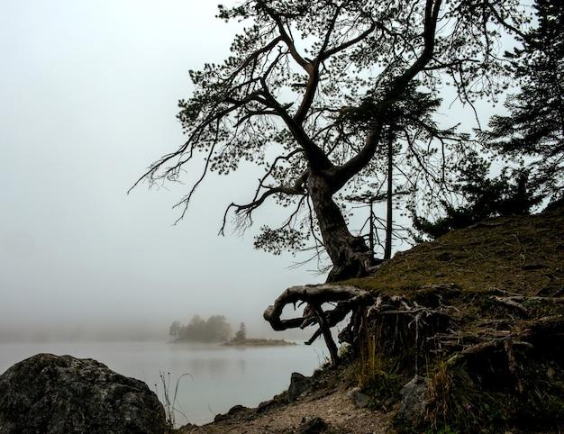 Albero con un lago zugspitze e un cielo nebbioso a eibsee