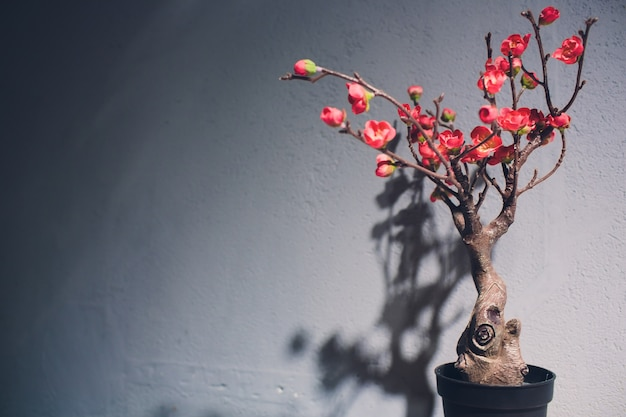 Albero dei bonsai curvo con frutti rossi su un tavolo contro un muro.