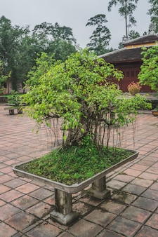 Albero dei bonsai in un tempio buddista