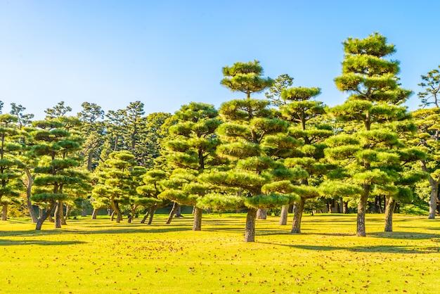 Albero dei bonsai nel giardino del palazzo imperiale alla città giappone di tokyo