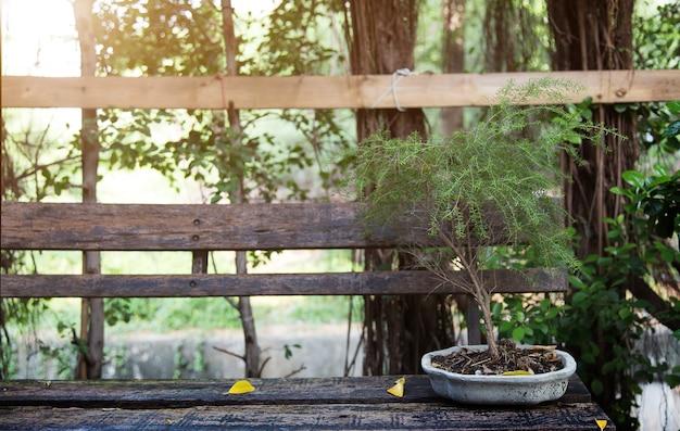 Albero dei bonsai nel giardino della decorazione del piatto di ceramica