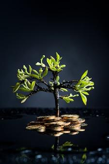 Albero dei soldi con le monete dopo la pioggia su una parete scura