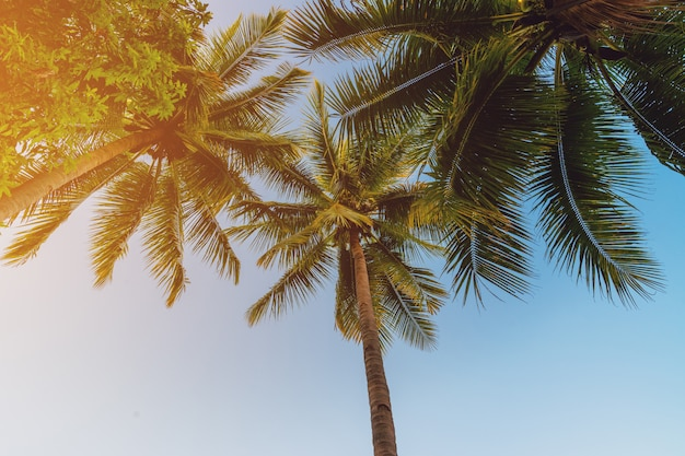 Albero del cocco alla costa tropicale in spiaggia dell'isola con il tono d'annata.