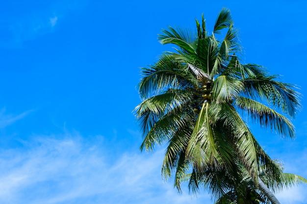 Albero del cocco con cielo blu e nuvola. bellissimo sfondo tropicale