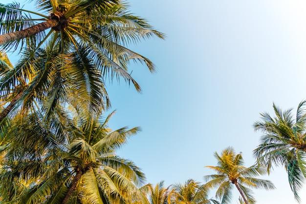 Albero del cocco con cielo blu