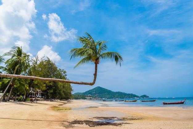 Albero del cocco con il cielo per estate e i precedenti di concetto della spiaggia, cocco con il cielo a koh tao, tailandia