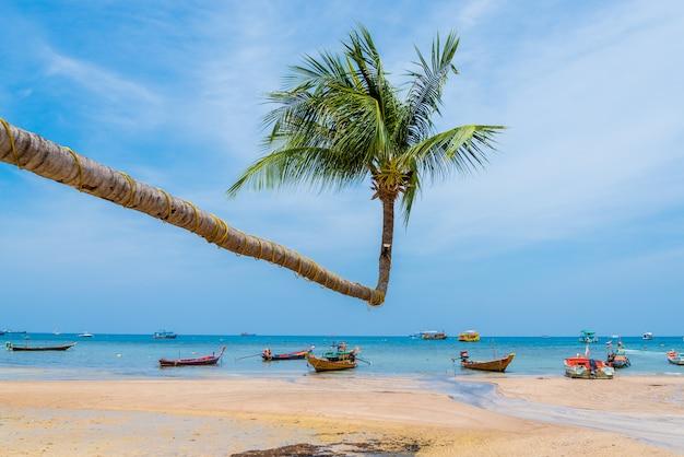 Albero del cocco con il cielo per l'estate e la spiaggia