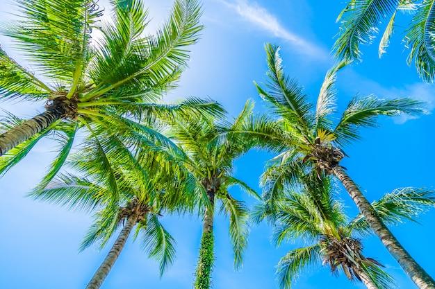Albero del cocco su cielo blu