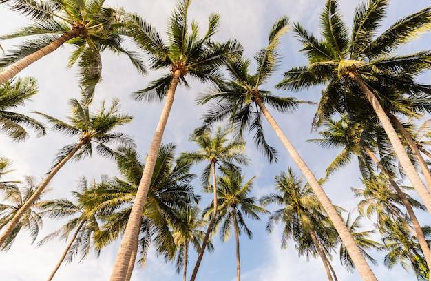 Albero del cocco sulla spiaggia della tailandia