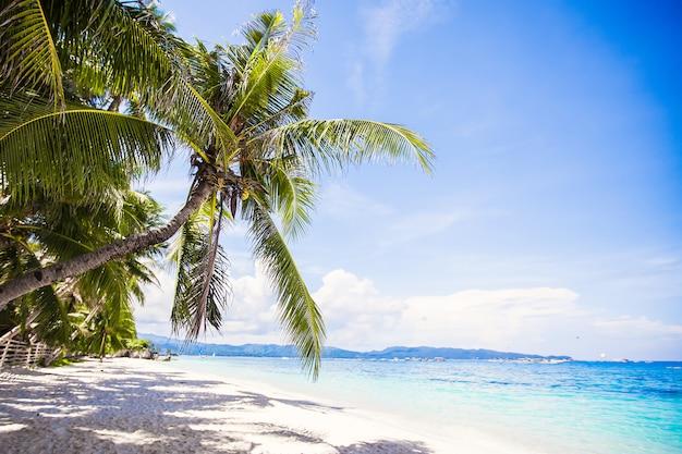 Albero del cocco sulla spiaggia sabbiosa bianca
