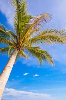 Albero del cocco sulla spiaggia sabbiosa e sul cielo blu