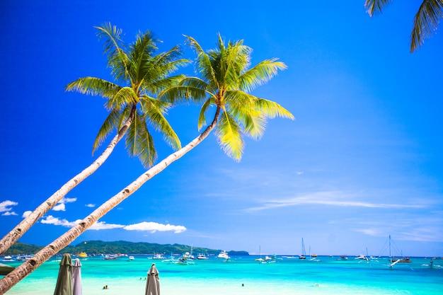 Albero del cocco sulla spiaggia sabbiosa in filippine