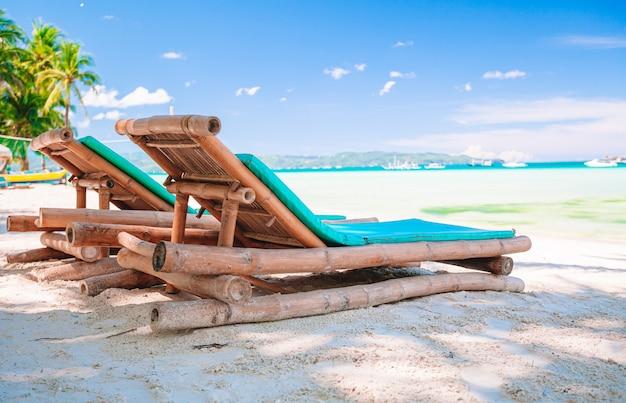 Albero del cocco sulla spiaggia sabbiosa