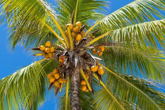 Albero del cocco sulla spiaggia