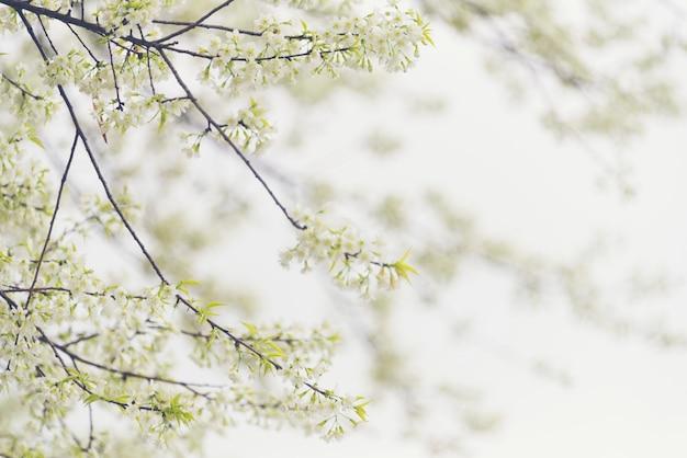 Albero del fiore bianco sullo sfondo della natura