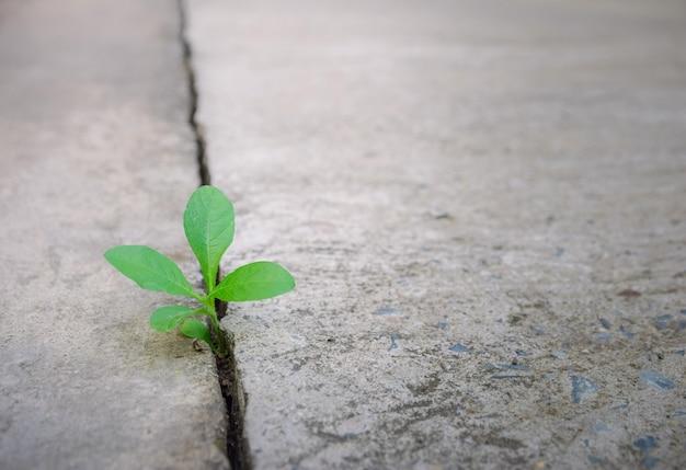 Albero della pianta di ecologia e siccità dell'ambiente che cresce sulla via incrinata