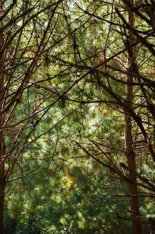 Albero delle caverne nella foresta