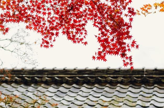 Albero di acero con foglie rosse