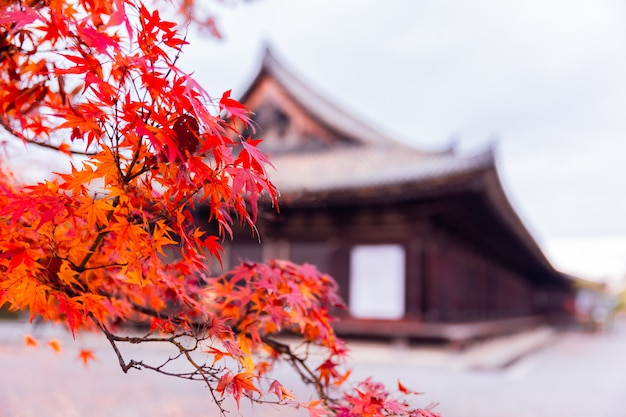 Albero di acero rosso nella stagione di autunno del santuario del giappone